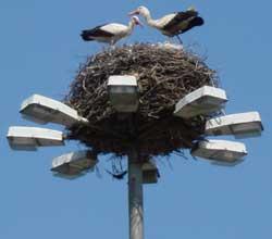 Storks nesting in Bulgaria