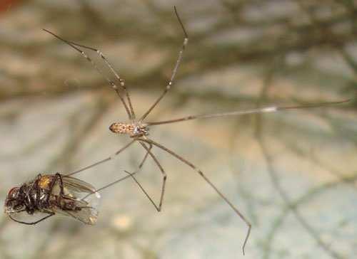 spiders eating their prey