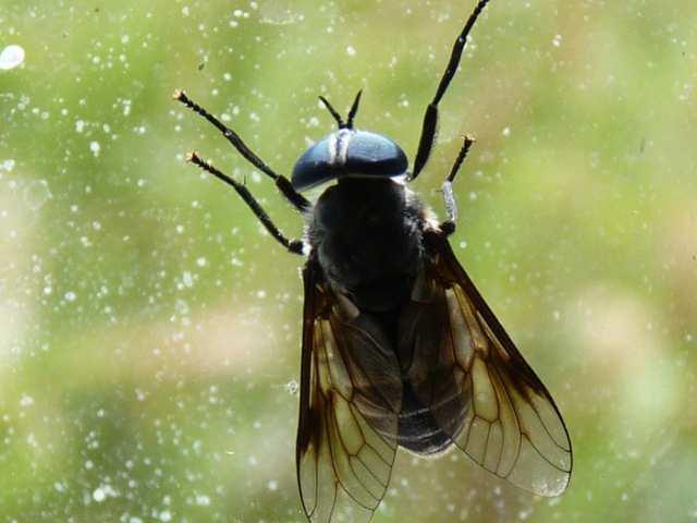 Does a fly pray?