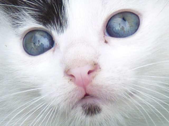 Kittens Cat n mouse