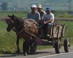 Working horse and cart in Bulgaria
