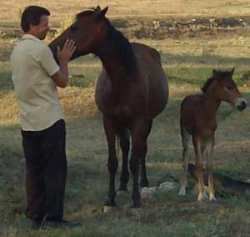 Mother and baby foal being well cared for in Bulgaria