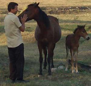 Bulgarian Horses