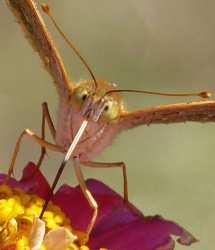 close up photos bugs animals Bulgaria