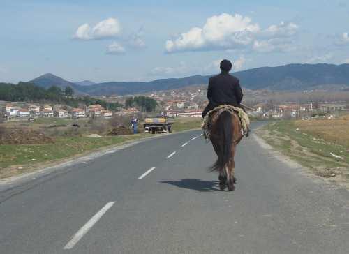 Horses the Bulgarian horse wild horses gypsy horses in Bulgaria