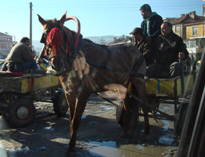 Working horses in the gypsy market Kardzhali town centre