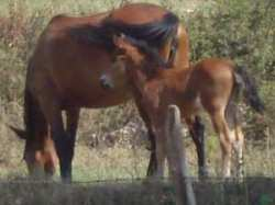 Newborn foal with her mother (mare)