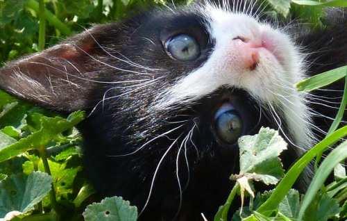 kittens and cats plus rare ginger female nursing mother